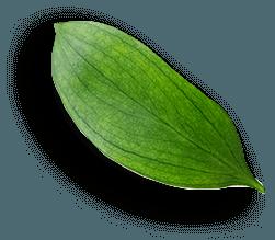 Mimos Estética Elche 3
