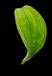Mimos Estética Elche 5